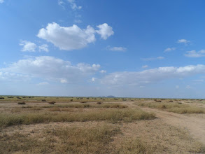 Photo: Somaliland countryside, looking exceptionally green this time of year.