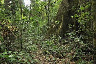 Photo: Mayombe forest...