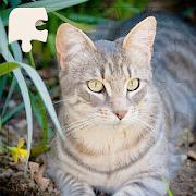 Rompecabezas de Gatos