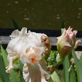 by Pal Mori - Flowers Flower Gardens