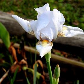by Larry Moore - Flowers Single Flower (  )