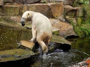 Photo: Knut hat einen Kokosnussschale entdeckt ;-)