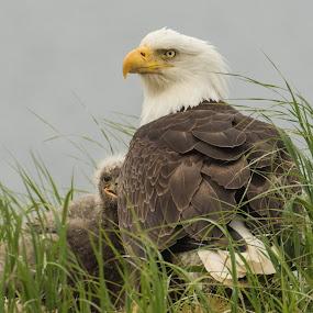by Sam Simon - Animals Birds