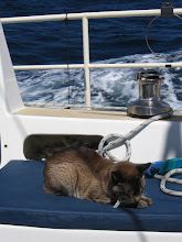 Photo: Ship's cat relaxed at 8kt