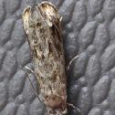 Dancing Moth
