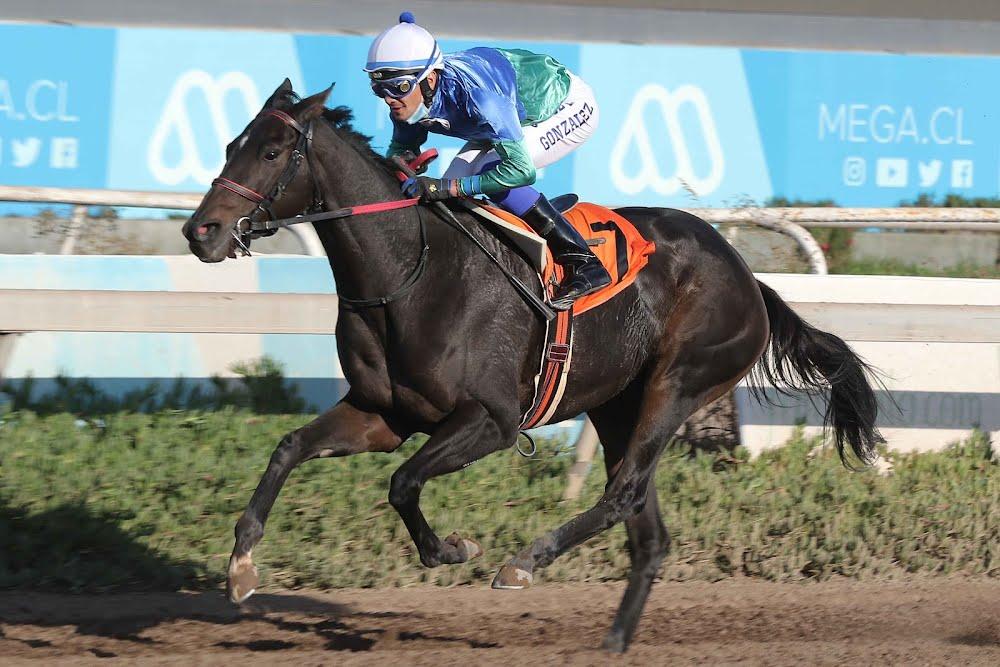 Galicada Streaps (Galicado) gana Handicap (1400m-Arena-CHS).