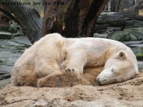 Photo: Gemuetlich hier - da schlaeft Knut gleich weiter ;-)