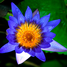 Blue by Min Hew - Nature Up Close Flowers - 2011-2013