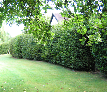 experts in hedge cutting worcestershire