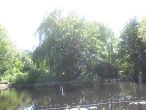 Photo: Trees at Naturkundemuseum