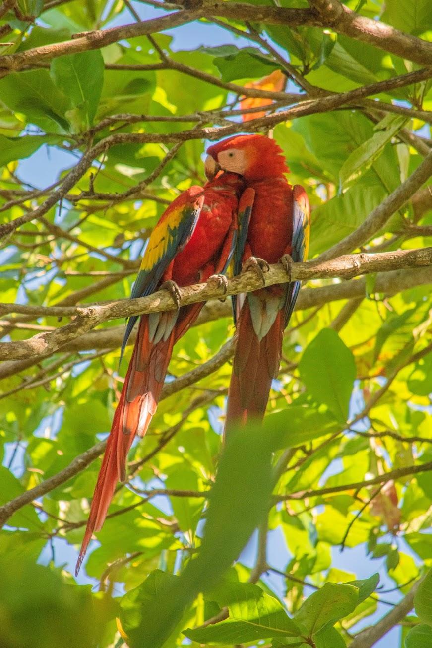 hoogtepunten-costa-rica