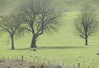 Photo: 12h28 Dans un pré quelques vautours veillent