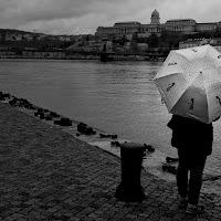 Lungo la riva del Danubio di