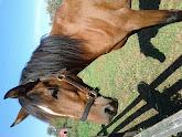Photo: Horse