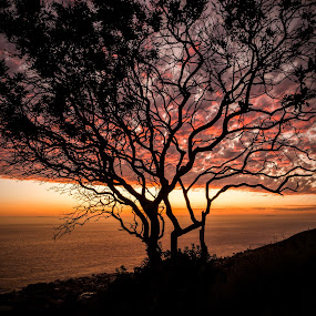 Tree on Fire by Kazuki Nakamura - Landscapes Waterscapes ( clouds, sky, dawn, tree, sunset, horizon, cloud, ocean, seascape, beach )