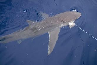 Photo: Credit: NOAA