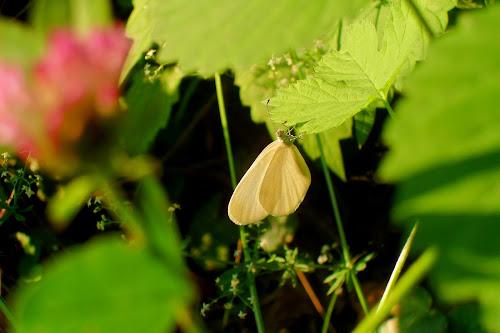 Delicate butterfly di Flavia Cantini PH