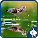 Reflection Jigsaw Puzzles icon