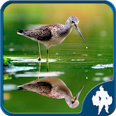 Reflection Jigsaw Puzzles