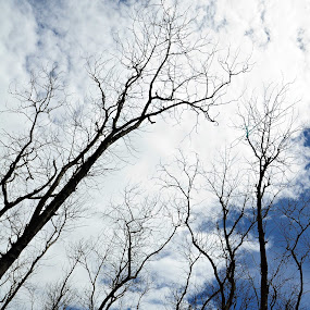 thirsty trees by Arifandi Krembong - Landscapes Forests ( jember, tree, thirsty, landscape, papuma )