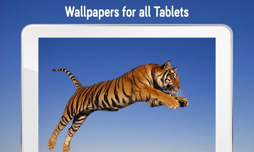 Tiger Wallpaper (4k)  screenshots 1