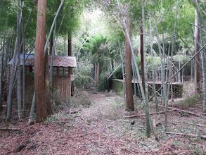 竹林を直進