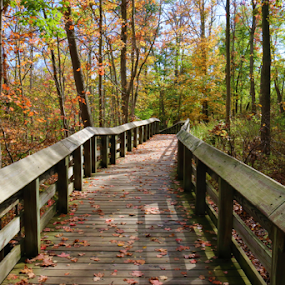 A Fall Walkway by Paul S. DeGarmo - Buildings & Architecture Bridges & Suspended Structures ( structure, park, colorful, fall, walkway,  )