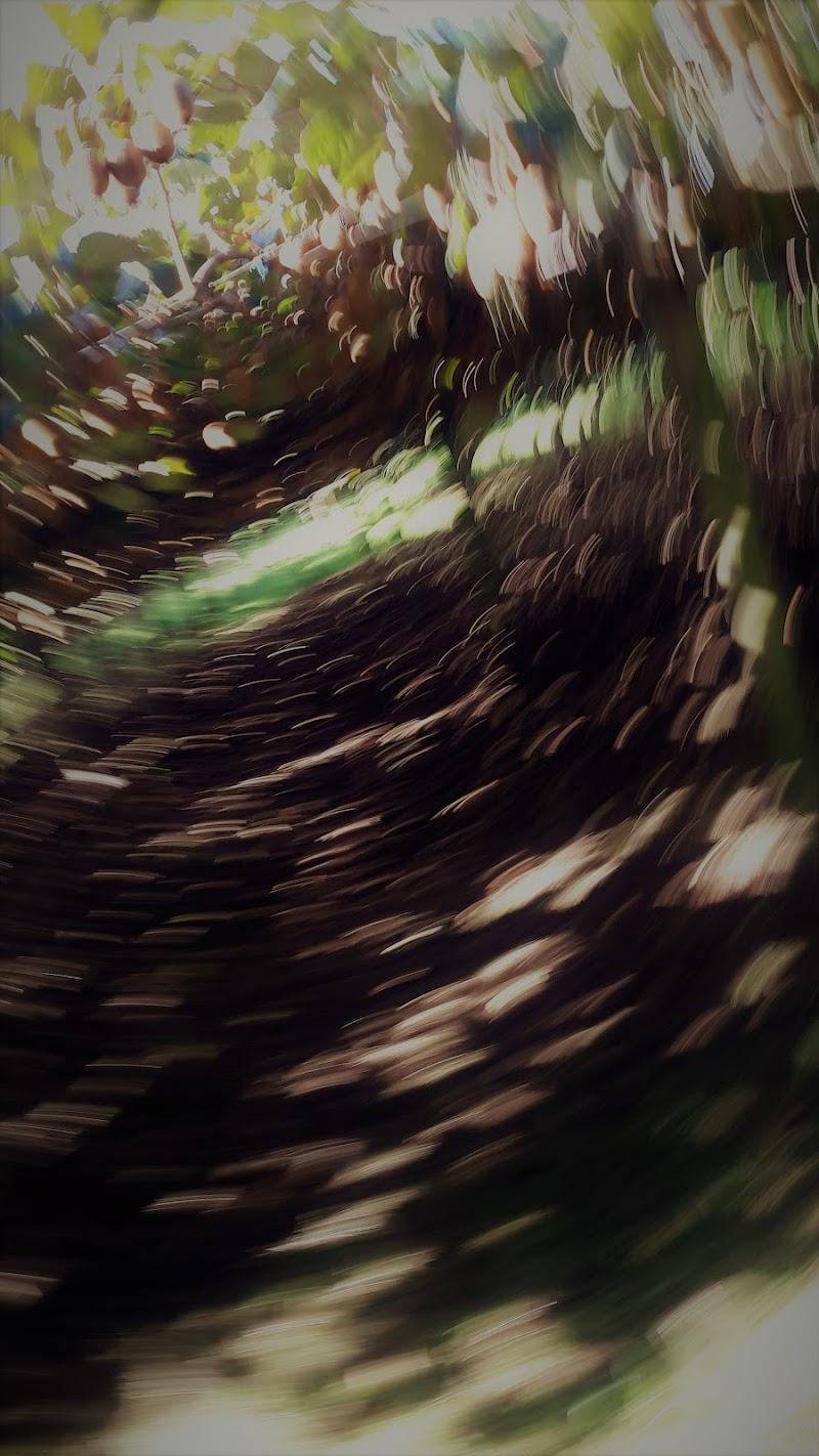 Kiwi orchard di djelem_gipsy