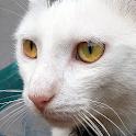 Cat Sounds - Meow Noises icon