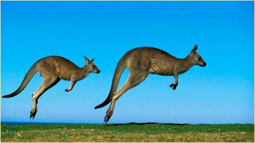 高清動物圖像