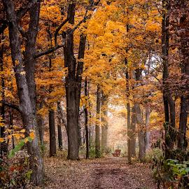 by Sue Matsunaga - Landscapes Forests