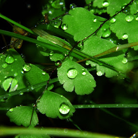 by Souvik Nandi - Nature Up Close Leaves & Grasses