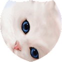 White pussy cat live wp icon