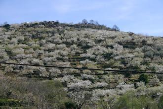 Photo: 21/03/08 El Valle del Jerte fotos Celima y Chuty