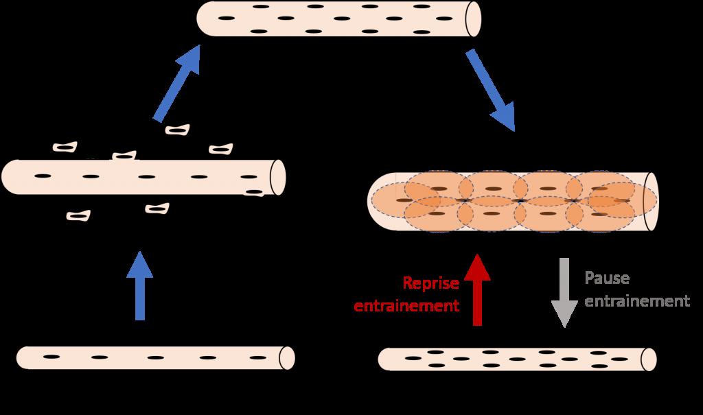 schéma mémoire cellulaire