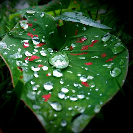 Drops of nature by Shubhamita Das - Novices Only Macro