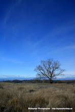 Photo: Tree Alone in lightness of polarized sky