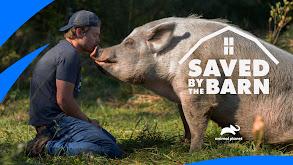 Hog Chase Rescue thumbnail