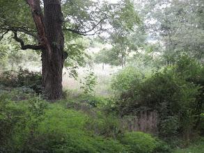 Photo: Enchanted Garden near Verona, WI August 2010