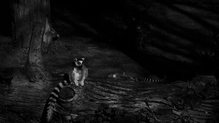Il Lemure Solitario di Elisabetta Di Franco