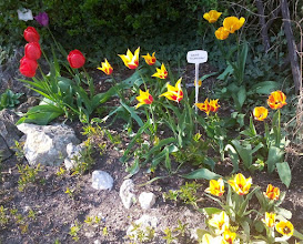 Photo: F4234111 w Ogrodzie Botanicznym