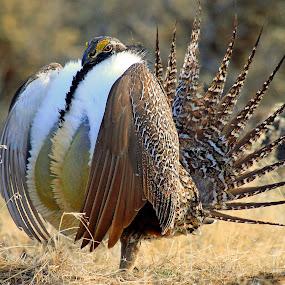 by Ron Harper - Animals Birds ( wy )