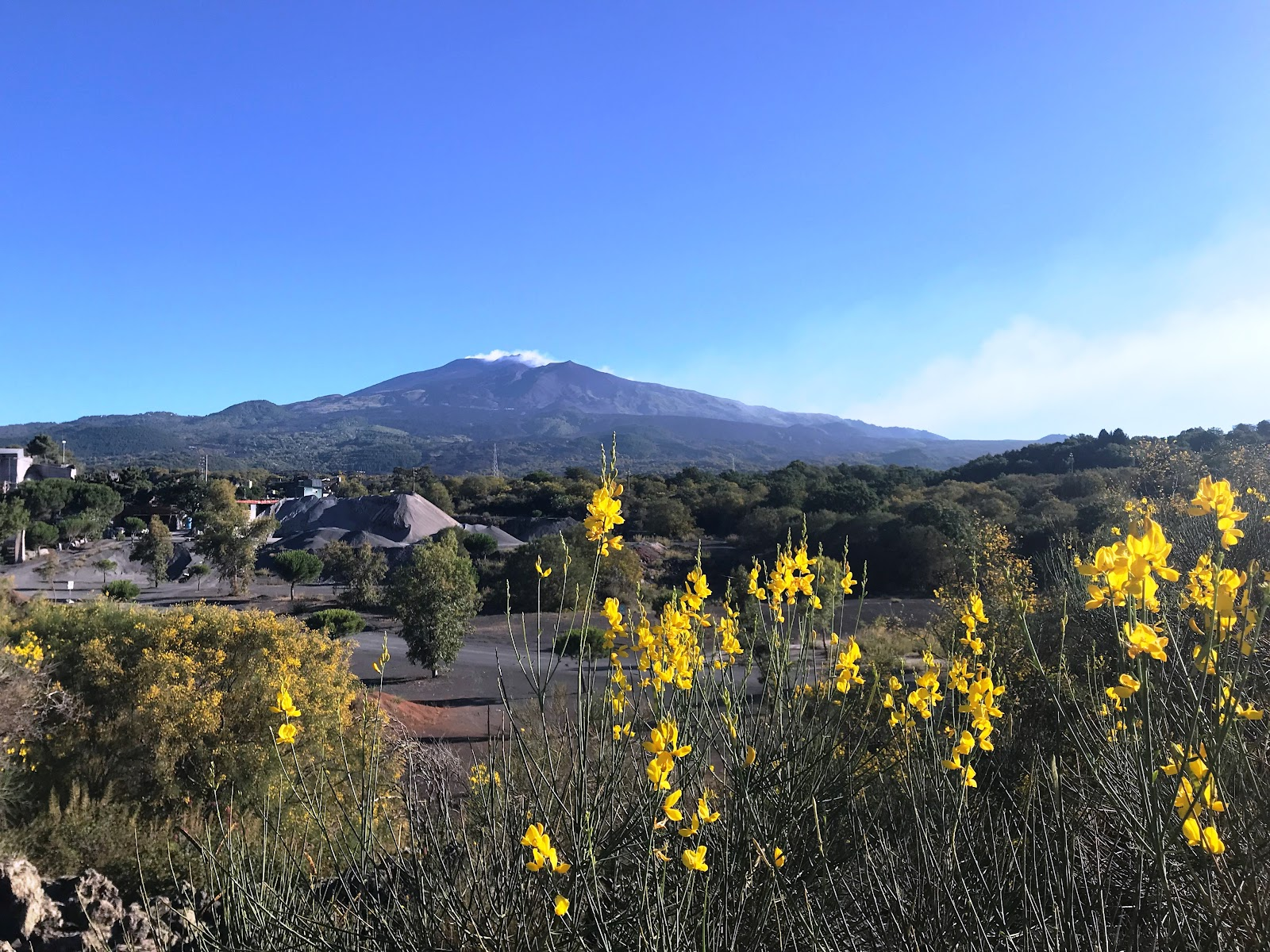Mount Etna Summit from afar with flowers in foreground