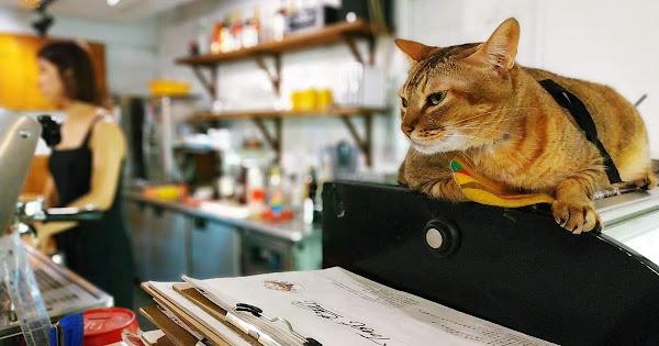 Toast Chat:來吸貓吧!親人5隻店貓與療癒美食 | 台北寵物友善餐廳 貓咪咖啡店 捷運國父紀念館站、忠孝敦化站