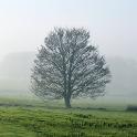 Aimsir - The Weather in Irish icon