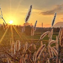 Nanos by Elida Dzanic - Nature Up Close Other plants ( #slovenija #nanos #postojna #grass #sun )