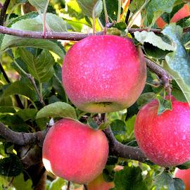 by Randy Wilkinson - Food & Drink Fruits & Vegetables (  )