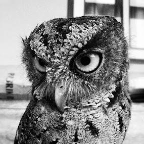 OWL by Zen Syarif Abidin - Instagram & Mobile Android