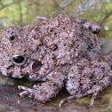 Big-headed frog