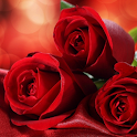wallpaper red roses icon